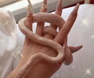 acrylic, nails, and snake image