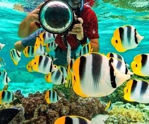 aquatic, diver, and nature image