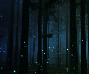 night and forest image