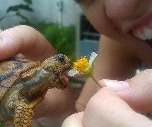 flower, tortue, and happiness image