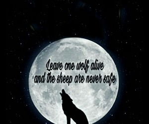 full moon, stars, and wolf image