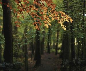 foliage, light yellow, and orange image