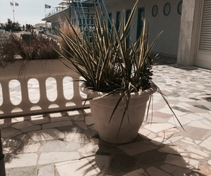 beach, italië, and plant image