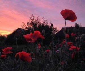 flowers, sunset, and alternative image