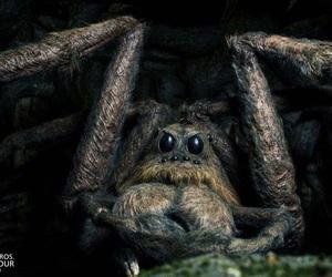harry potter, spider, and aragog image