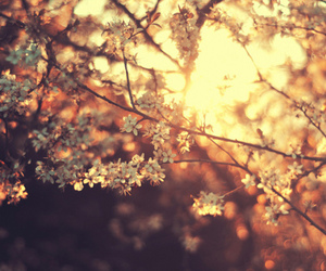 flowers, tree, and sun image