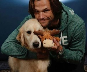 dog, moose, and puppy image