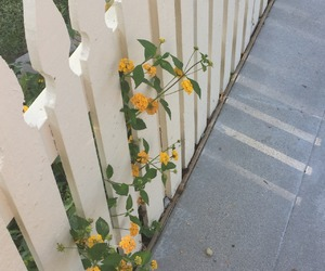flowers, yellow, and fence image