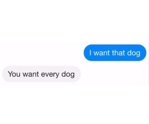 chat, dog, and text message image