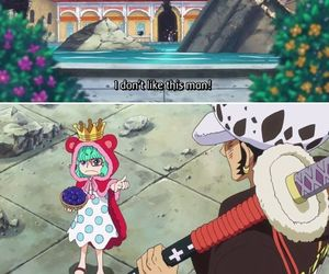 Law, one piece, and sugar image