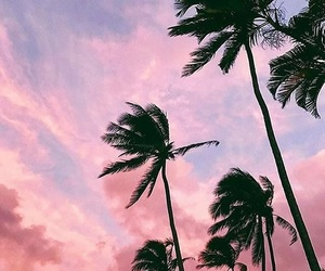 summer, blue, and palms image