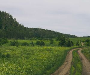 field, green, and road image