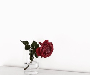 red, red rose, and rose image