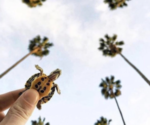 palm and turtle image