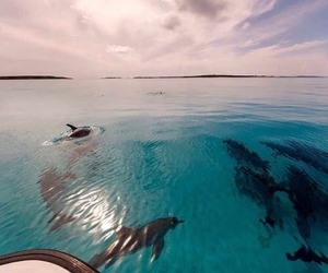 blue, pastel, and dolphins image