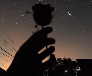 rose, night, and moon image