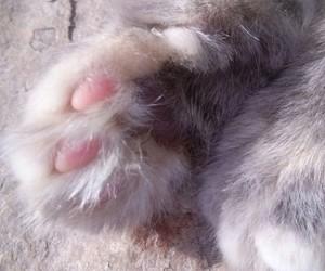 Animales, mascotas, and gato image