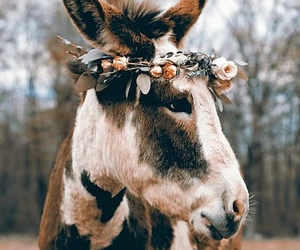 animal, boho, and donkey image