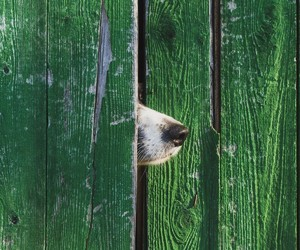 dogs, gate, and green image