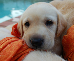 cute, dog, and puppy image