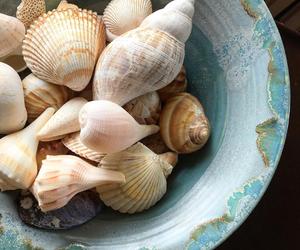 shells, sea, and beach image