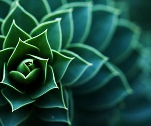 closeup, macro, and colorfull image