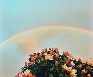 flowers, rainbow, and rose image