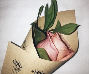 grain, pink rose, and classic image