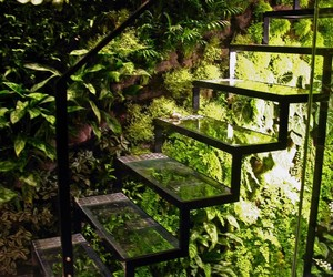 stairs, green, and plants image