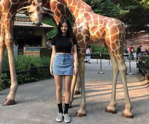 asian, fashion, and giraffe image