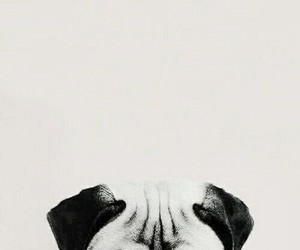 dog, wallpaper, and tumblr image