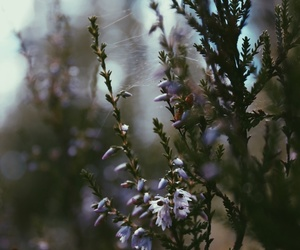 aesthetic, flowers, and forest image