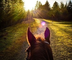horse, freedom, and view image