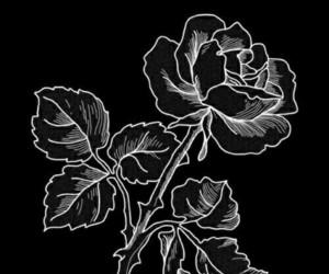 wallpapers wallpaper rose image
