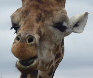 Girafe, nature, and photo image