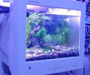 fish, computer, and aesthetic image
