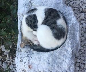 black white, melanie martinez, and cat image