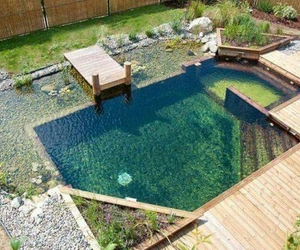 pond, summer, and water image