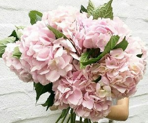 flowers, pink, and hydrangea image