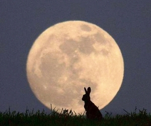 moon, rabbit, and bunny image