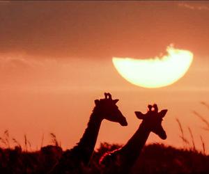 africa, safari, and sunrise image