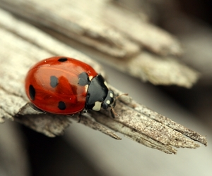 alternative, ladybug, and nature image