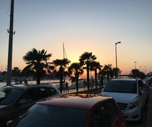 palm trees, sunset, and zadar image