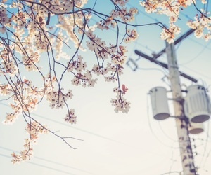icons, theme, and spring indie image
