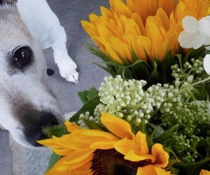 brown and white, beautiful flowers, and flower dog image