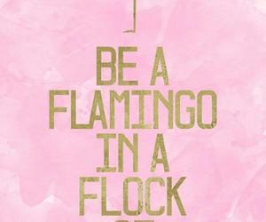 flamingo and pink. image