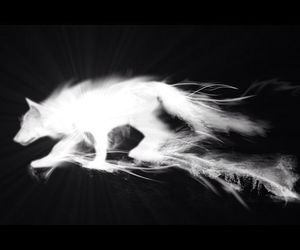 black and white, shadow, and wolf image