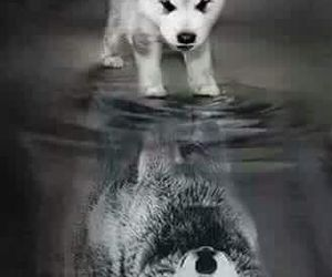 illusion, wolf, and reflection image