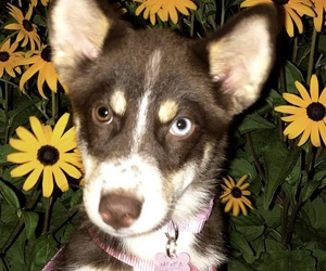 animal, flowers, and puppy image