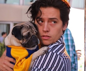 cole sprouse, Hot, and pug image